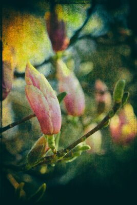 Canvas print Saucer Magnolia with artistic post processing