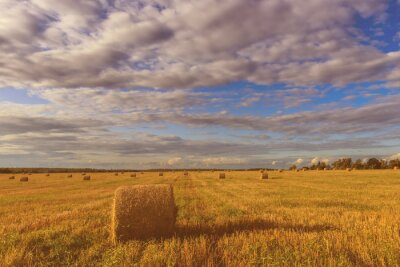 Scene with haystacks on the field in autumn sunny day. Rural landscape with cloudy sky background. Golden harvest of wheat in evening.