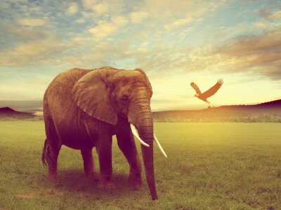 Canvas print scenery including a elephant africa