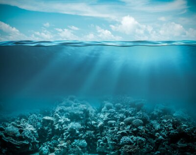 Canvas print Sea or ocean underwater deep nature background