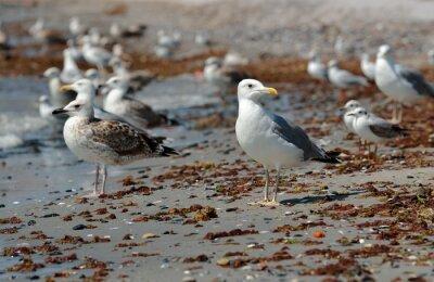 Canvas print Seagull on the beach