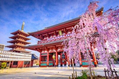 Canvas print Sensoji Temple in Asakusa, Tokyo, Japan