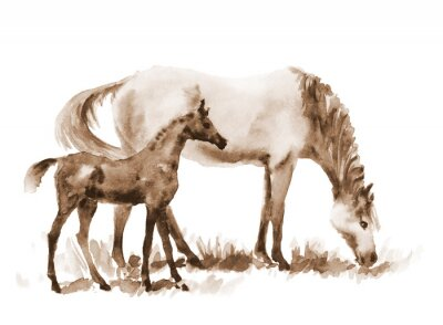 Canvas print Sepia watercolor mare and foal on white. Beautiful hand painted illustration of two horses on the field.