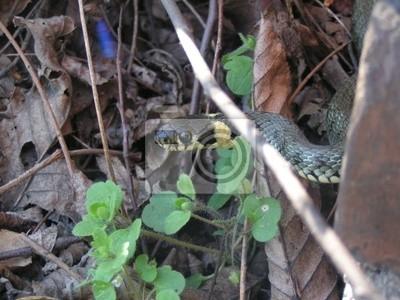serpent in garden