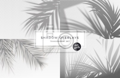 Canvas print Set of shadow background overlays. Realistic Shadow mock up scenes. Transparent shadow of tropical leaves. Vector illustration