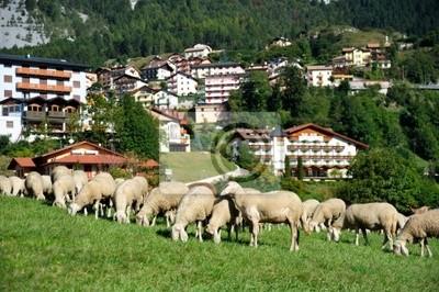 Sheep in a village