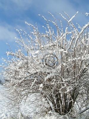 shrub in winter