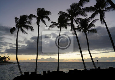 Sihouette Palm Trees Blowing in Wind