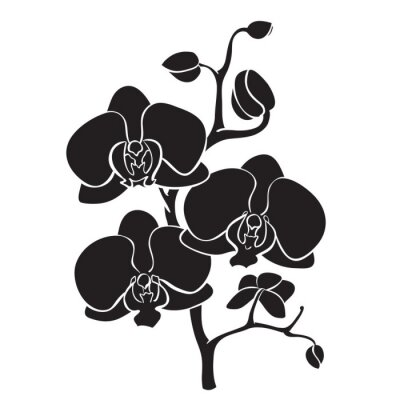Canvas print Silhouette orchid branch