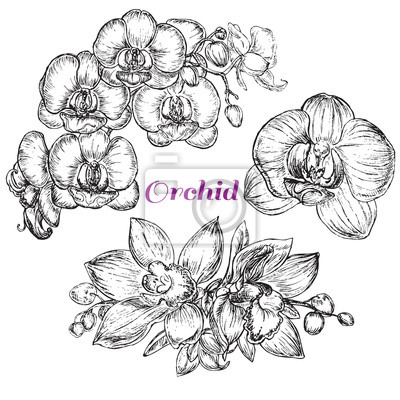Canvas print sketch style black orchid