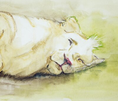 Canvas print Sleeping lion. The dabbing technique near the edges gives a soft focus effect due to the altered surface roughness of the paper.