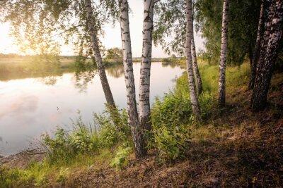 Canvas print slender birch