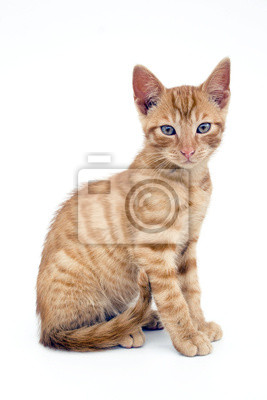 small red cat