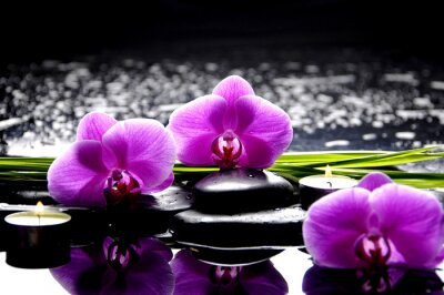 Canvas print Spa still life with set of pink orchid and stones reflection
