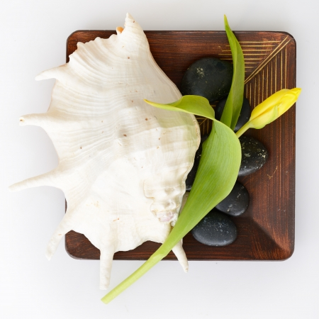 spa still life with tulip, stones and sea shell on wooden bowl over white background