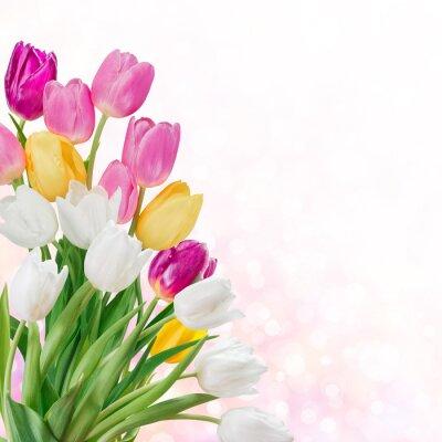 Canvas print Spring background
