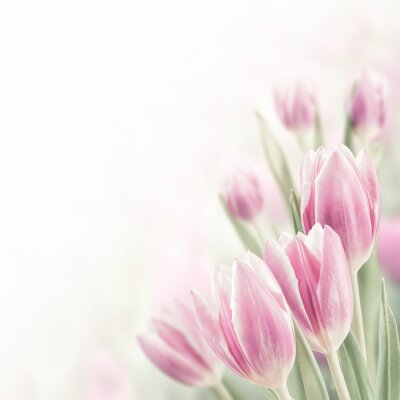 Canvas print Spring Background with Tulip