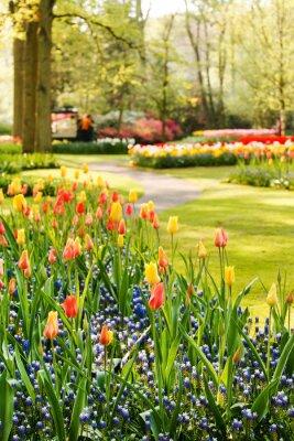 Canvas print spring garden