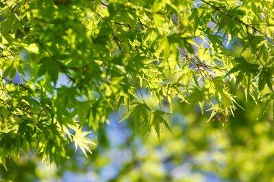 Canvas print spring tree