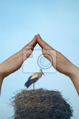 stork i