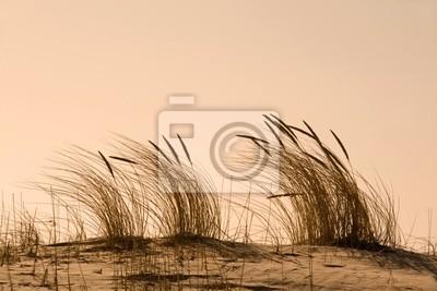Strandhafer im Abendlicht