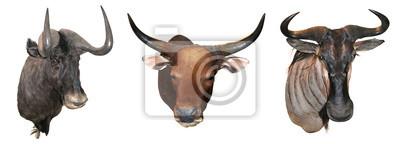 Stuffed buffalo head