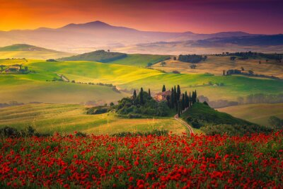 Canvas print Stunning red poppies blossom on meadows in Tuscany, Pienza, Italy