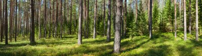 Canvas print Summer forest panorama