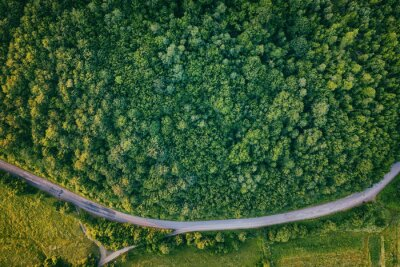 Summer landscape with green trees and narrow winding road, aerial view, outdoor travel background
