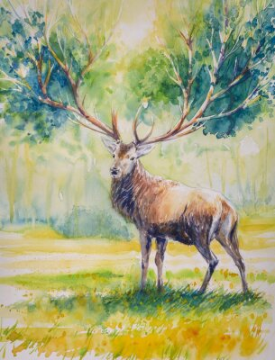 Canvas print Summer.Red deer with big  horns on whose grow leaves.Picture created with watercolors.