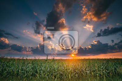 Summer Sunset Evening Above Countryside Rural Cornfield Landscape