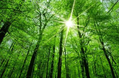 Canvas print sun shining through tree branches