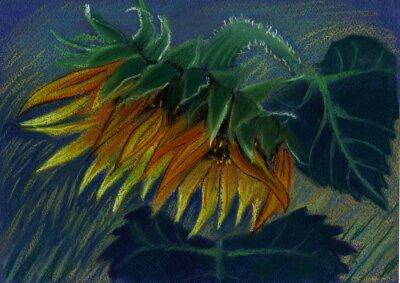 Canvas print sunflower. pastel