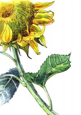 Canvas print sunflower, watercolor