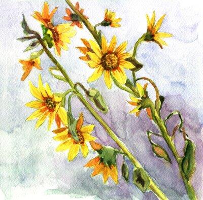 Canvas print sunflowers, watercolor