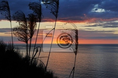 sunset above sea with silhouette of grass