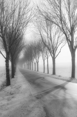 Canvas print Tall bare trees besides a country road in winter