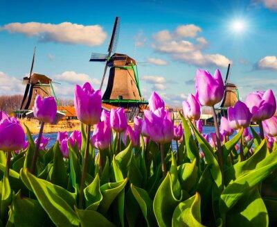 Canvas print The famous Dutch windmills