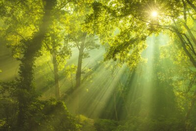 Canvas print The Forest of Heaven