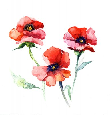 Canvas print the spring flowers poppy painting watercolor isolated on the white background