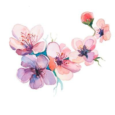 Canvas print the spring flowers watercolors isolated on the white background