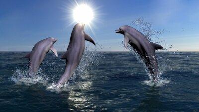 Canvas print Three dolphins