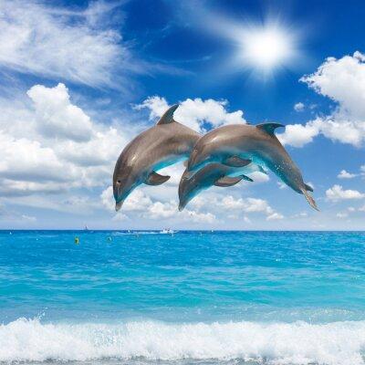 Canvas print three  jumping dolphins