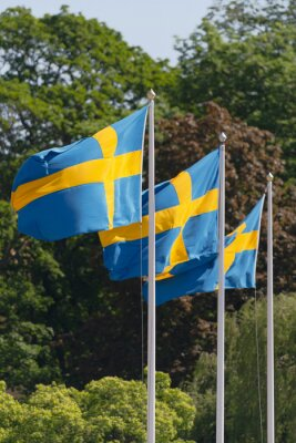 Three swedish flags in blue and yellow blowing in the wind with green tree background