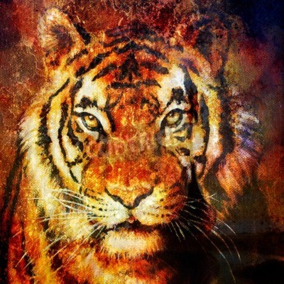 Canvas print Tiger head, abstract color Background, computer collage, Eye contact