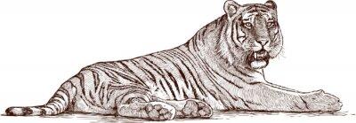 Canvas print tiger lying