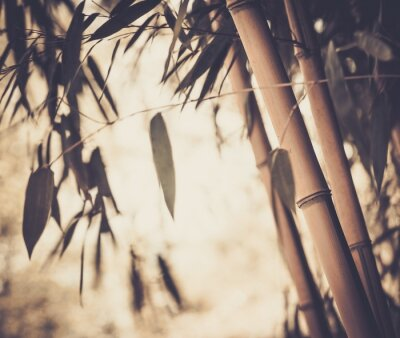Canvas print Toned picture of a bamboo plant