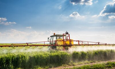 Canvas print Tractor spraying wheat field