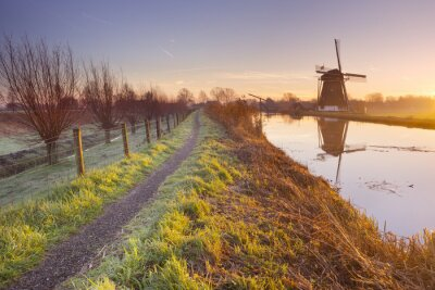 Canvas print Traditional Dutch windmill in The Netherlands at sunrise