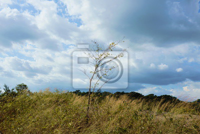 tree blowing from wind on Khao Lon mountain in Thailand
